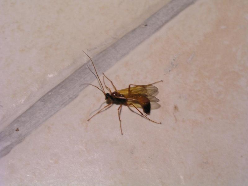 quel est cet insecte volant black bedroom furniture sets. Black Bedroom Furniture Sets. Home Design Ideas
