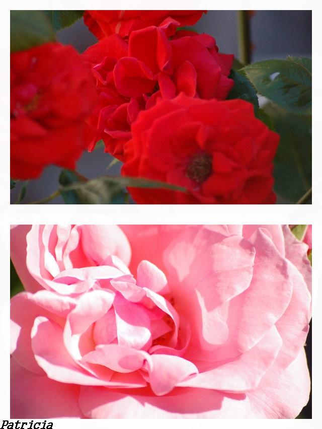 et vlà le travail... dans fleurs 10710