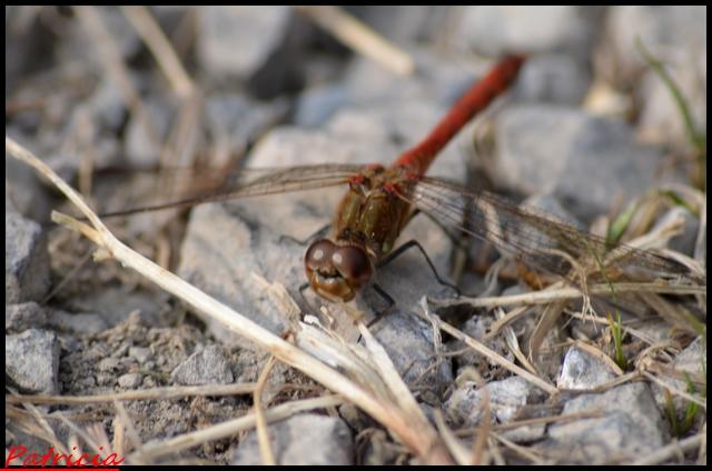 dsc_0020 dans insectes