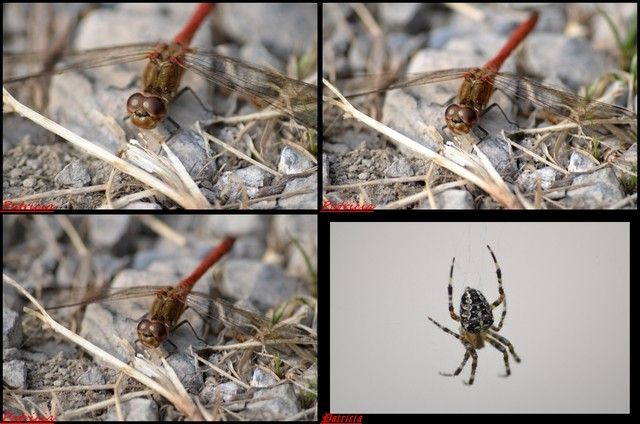 montag14 dans insectes