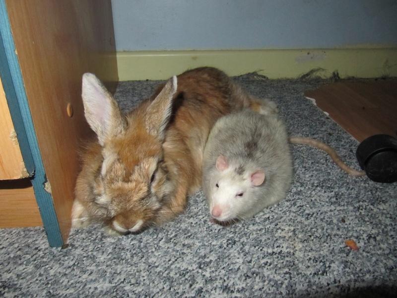 rat et pinou