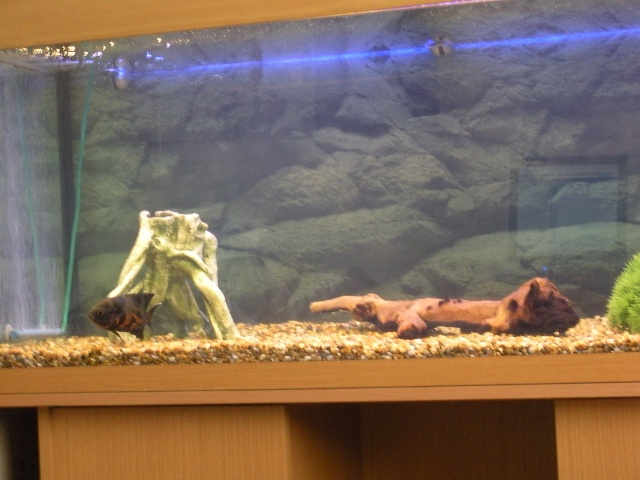 Safe resins paint etc for aquariums for Fish safe paint