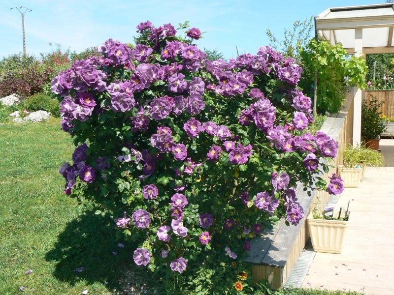 qu 39 avez vous fait au jardin d 39 ornement aujourd 39 hui page 389 au jardin forum de jardinage. Black Bedroom Furniture Sets. Home Design Ideas