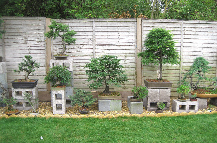 Backyard Bonsai Garden : Bonsai Garden