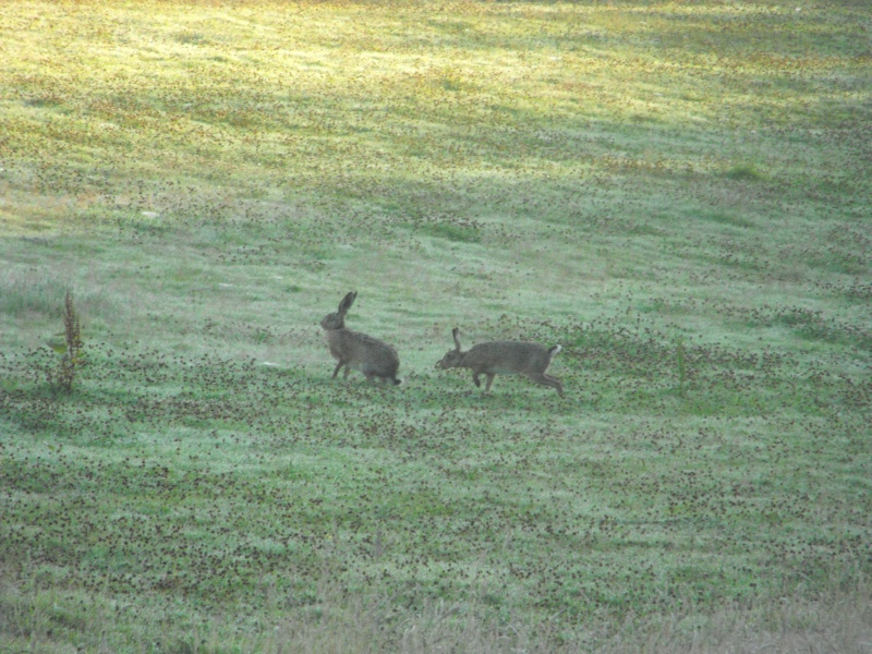 Help lapin qui fait pipi partout - animauxaufeminincom