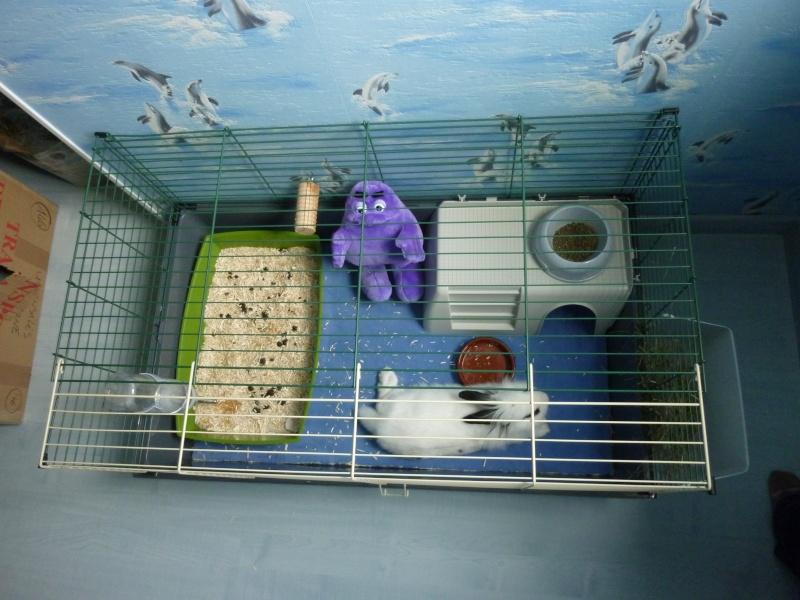 Besoin de conseils pour le 2 me tage d 39 une cage lapin hamsters cochons d 39 inde lapins - Comment couper les griffes d un lapin ...