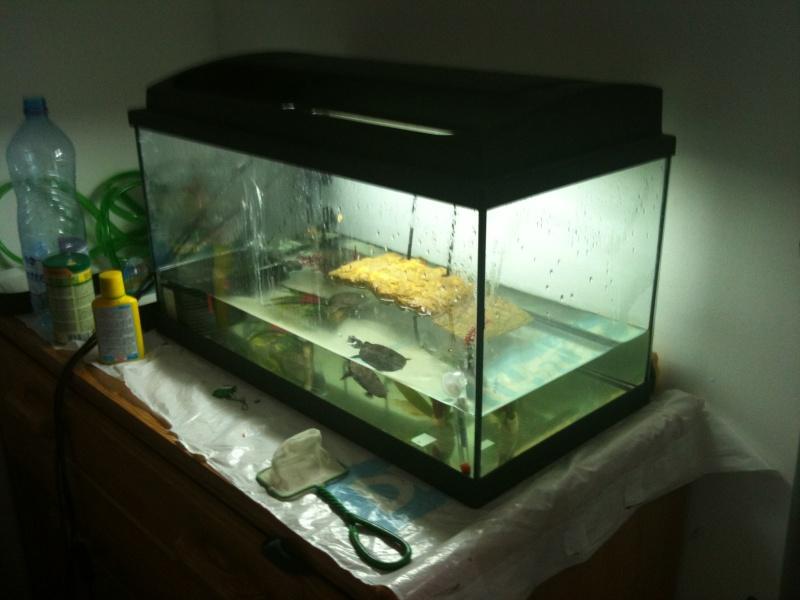 Nettoyer Decor D Aquarium