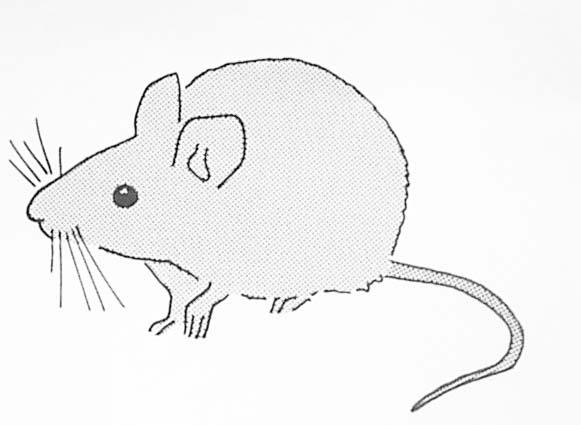 Modele souris pour tatouage - Dessin petite souris ...
