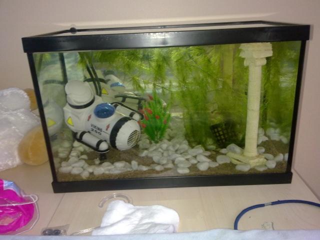 Lancement aquarium 20l for Filtre aquarium 20l