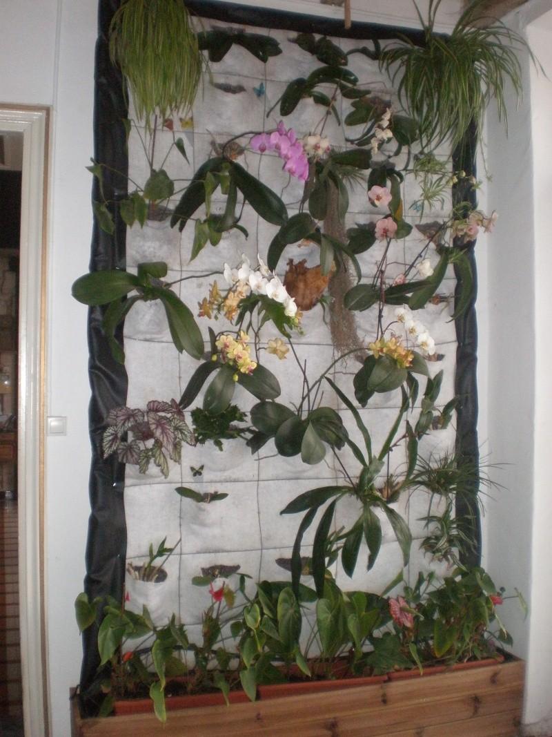 Extrêmement Mur végétal VB92