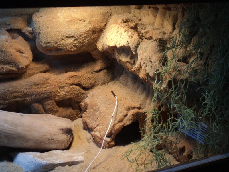 D cor de fond pogona - Decor fond terrarium desertique ...