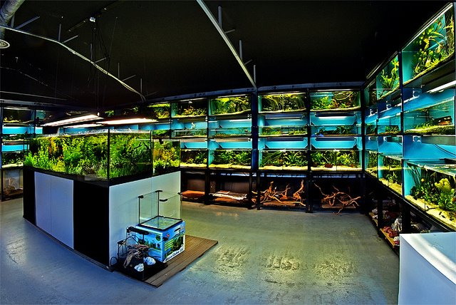 aquadico forum choix entre batterie ou aquarium classique. Black Bedroom Furniture Sets. Home Design Ideas