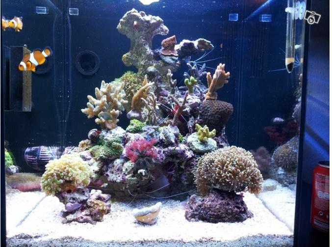Aquarium eau de mer 130l for Aquarium eau de mer