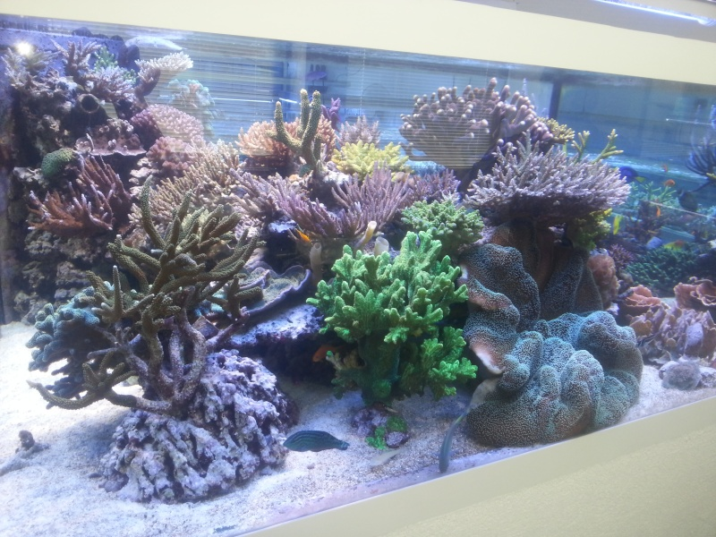 recifal-france • Whitecorals et korallen outlet : les ...