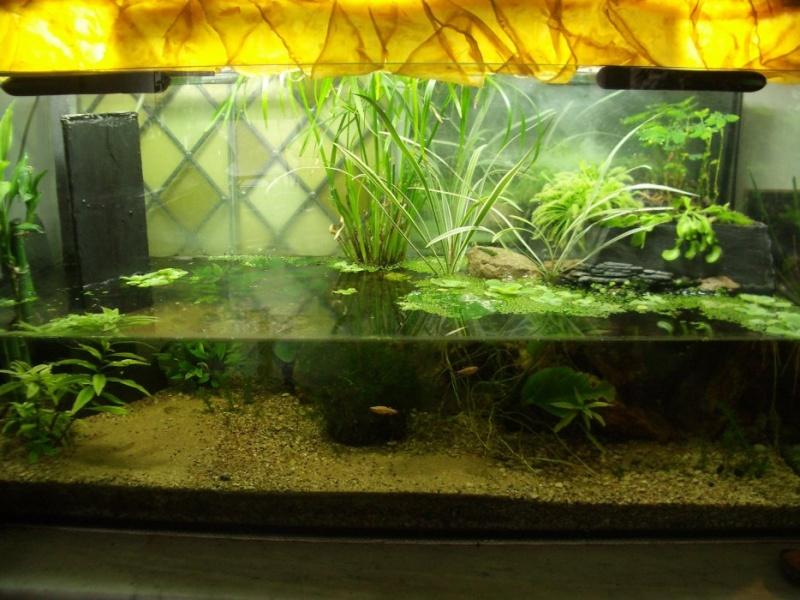 Aquarium qui continu l 39 ext rieur for Aquarium exterieur