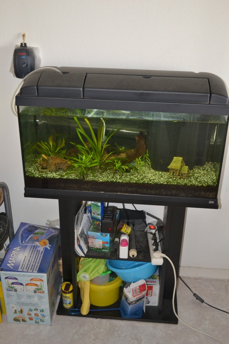 Vend aquarium rena 80l tout quip poisson asiatique 33 for Vend aquarium