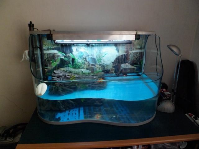 Pr sentation de mes trachemys scripta scripta aidez moi for Aquarium tortue aquatique