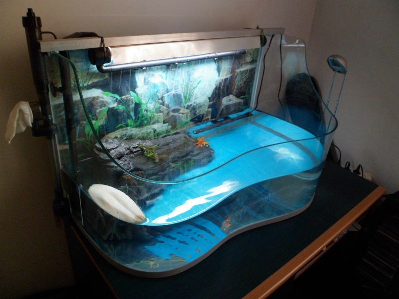 Aquarium Avec Tortue Et Poisson Questions Tortue D Eau Aquariums Et Vivariums