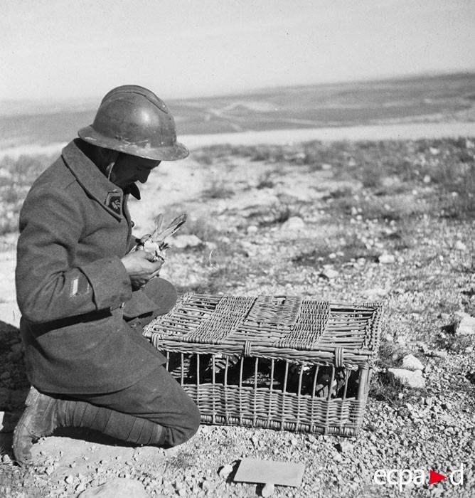 La campagne de Tunisie, 17 novembre 1942 – 13 mai 1943 (côté français) source ECPAD terre-10