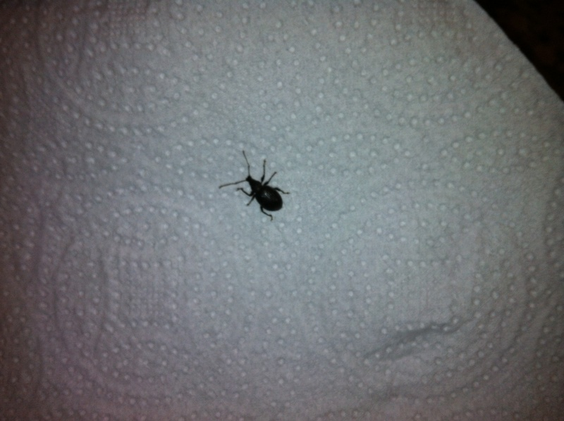 insectes envahissant ma maison. Black Bedroom Furniture Sets. Home Design Ideas
